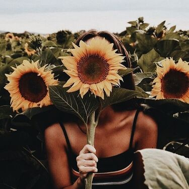 'cause we need sunflowers in ours lives