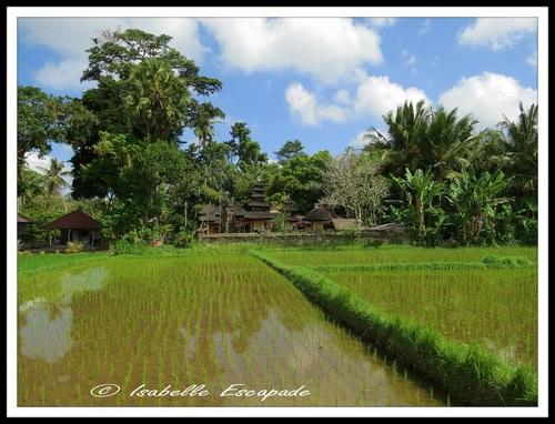 09 Août 2014 - Jalan jalan autour d'Ubud...