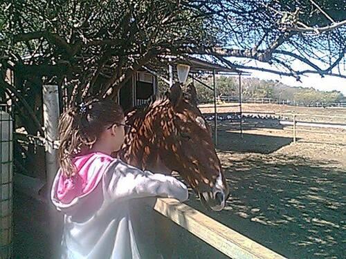 location de chevaux en demi -pension vacances de juillet août 2016