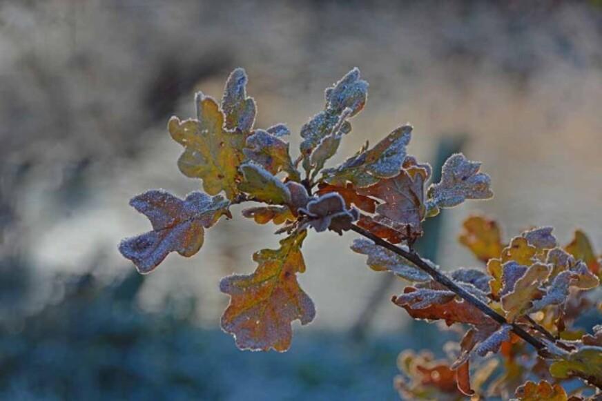 Givre-neige-6-2885_modifie-1.jpg