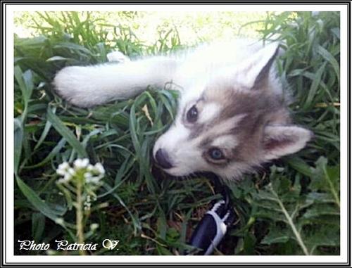 Inouk (2 mois)