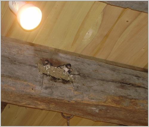 Entre ombre et lumière : nid d'oiseau