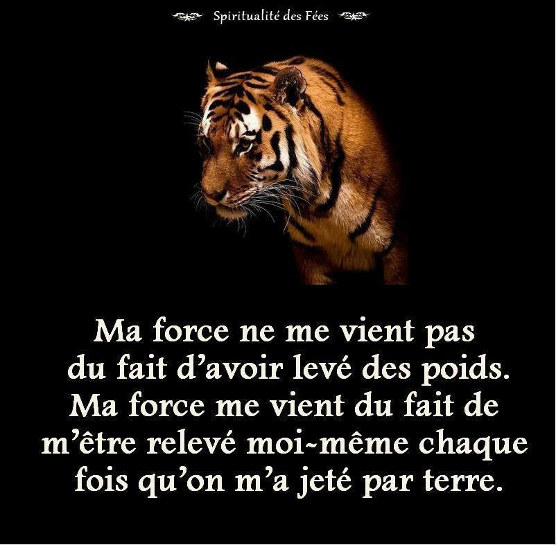 JEAN-CHRISTOPHE (TIGER)