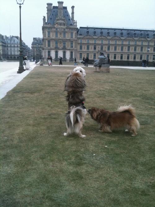 Akira au Louvre