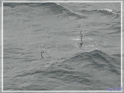Au loin, les côtes de la Géorgie du Sud se dessinent, les oiseaux se font plus nombreux autour du Lyrial