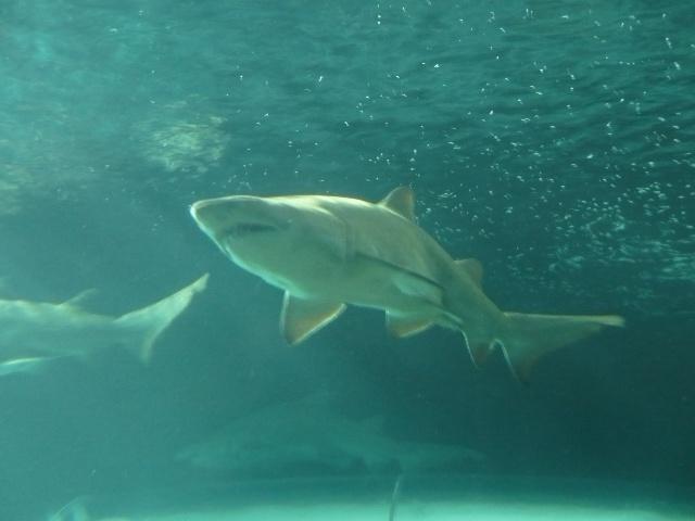 L'aquarium de Sydney