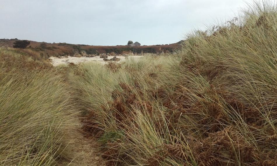 dune au vent
