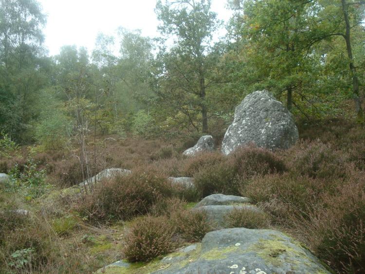 Aisne-Les bruyères du Tardenois