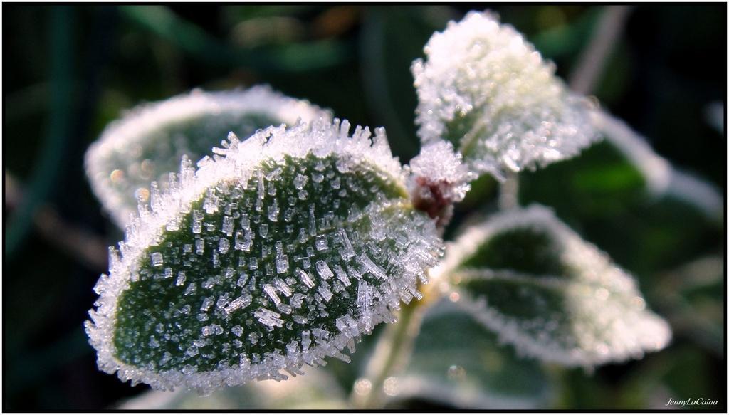 Nature Cristal