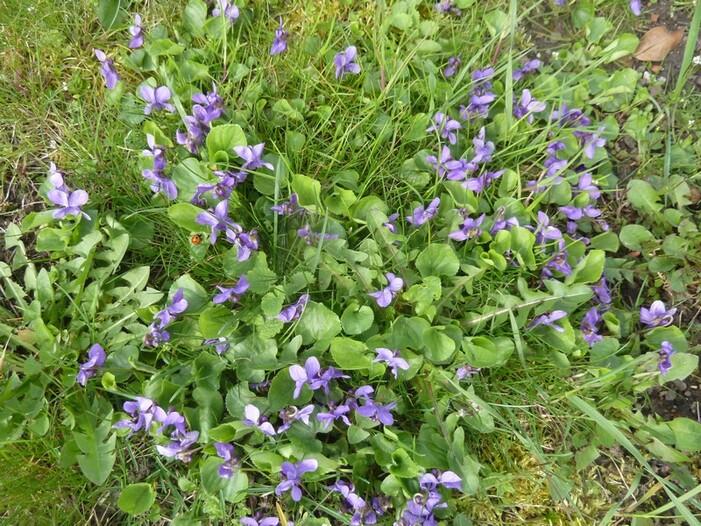 Secrets de violettes...