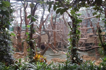 zoo cologne d50 2012 120