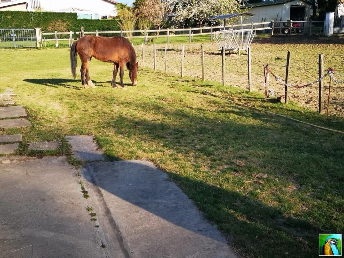 Nos trois chevaux !
