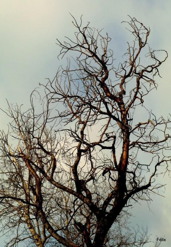x01 - Des branches