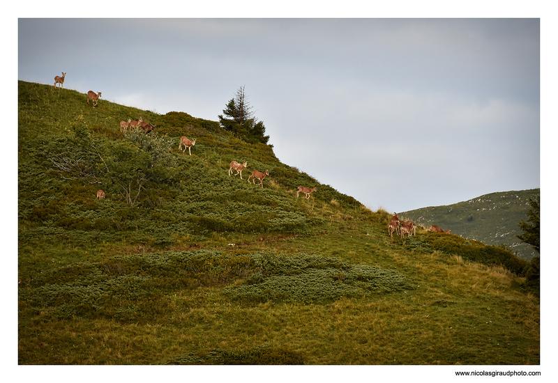 La Grande Sure :  l'autre réserve de Chartreuse!
