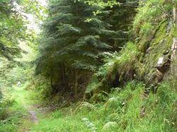 La forêt sur le parcours de la randonnée
