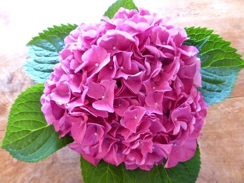 en rose :