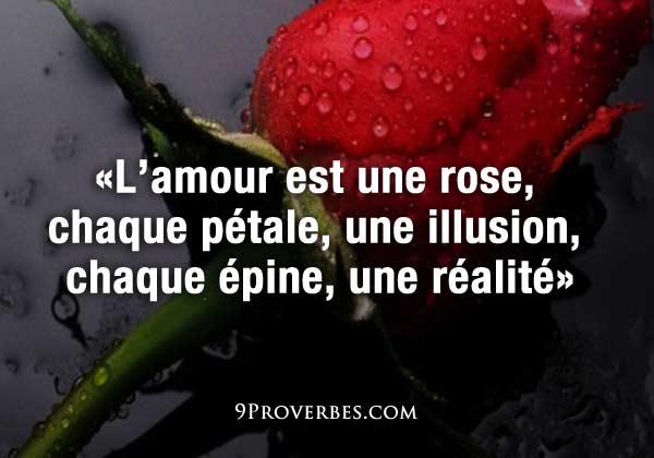 la vie... une rose
