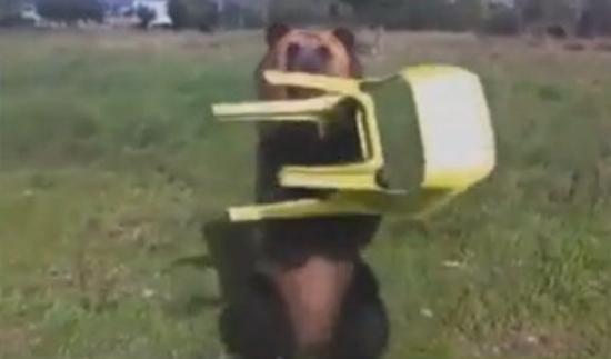 Cet ours peut aussi jongler avec une chaise