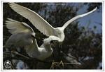 Galerie oiseaux (2013/5)