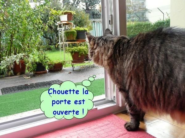 pluie-et-chats-01.JPG