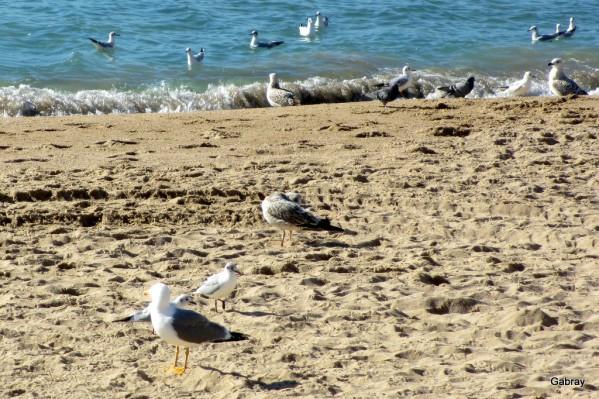 k15---Mouettes-sur-la-plage.JPG