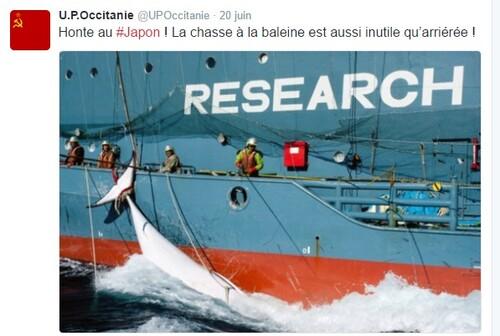 [Flandrensis-Occitanie] : Réactions face à la chasse balainière