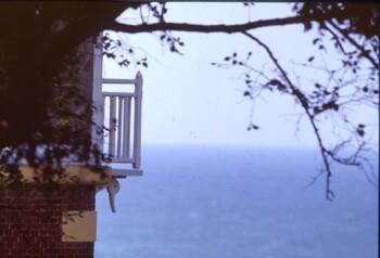 Le Bois de Cise, souvenir d'un sous-bois