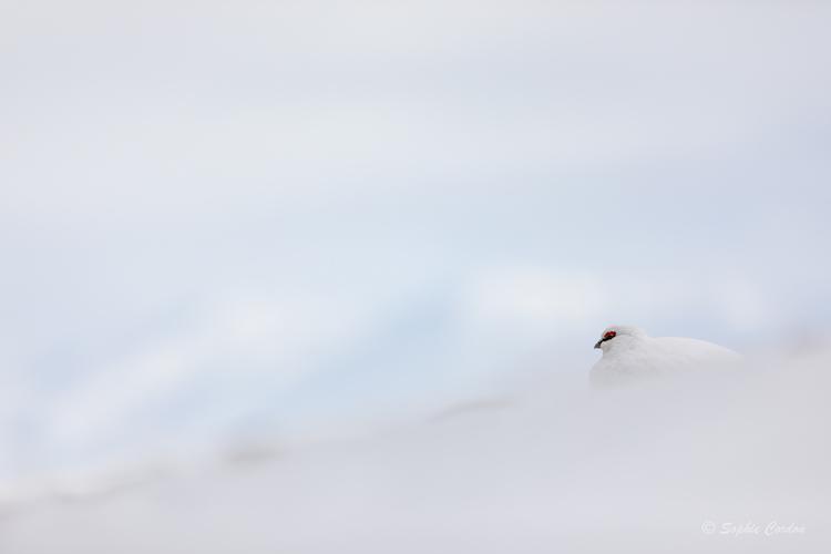 A la chasse à la perdrix