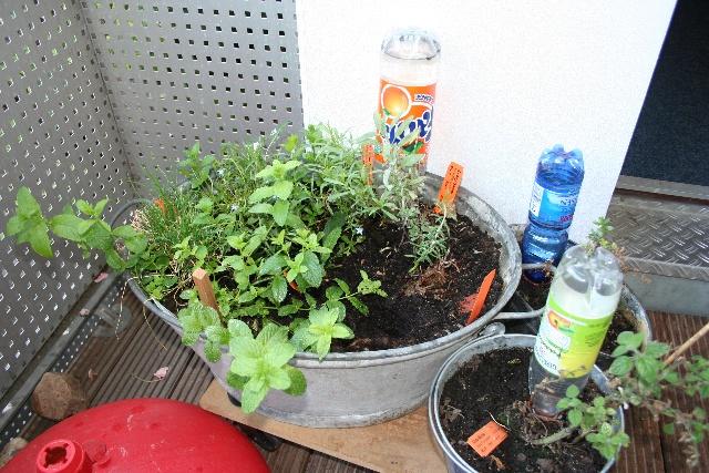 pflanzen in pet flaschen 6 x wasser spender pflanzen bew sserung pet flaschen aufsatz ton. Black Bedroom Furniture Sets. Home Design Ideas