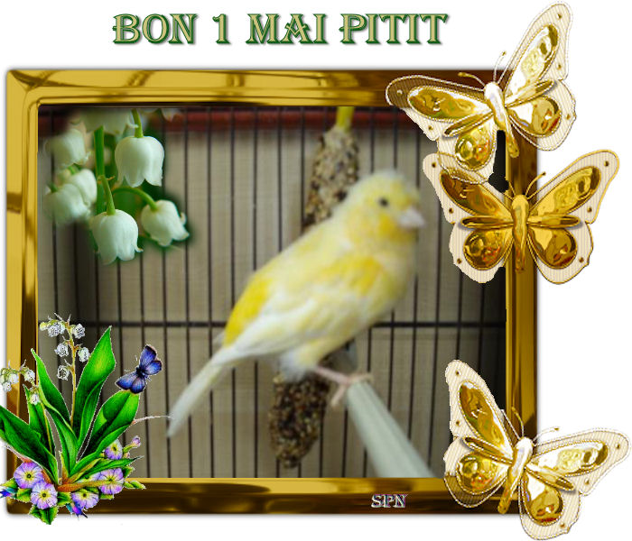 Pitit  (1)