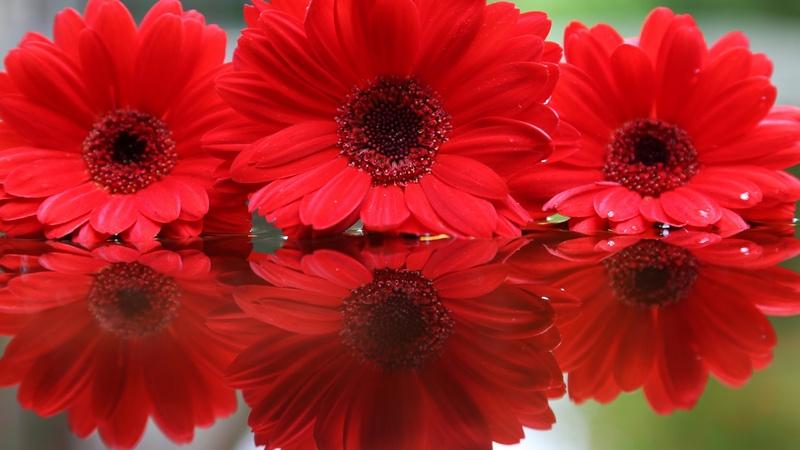 20 images de fleurs #5