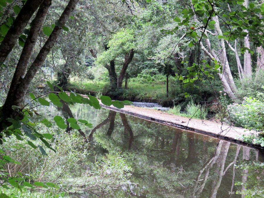 le bois d'Amour à Pont Aven  -3