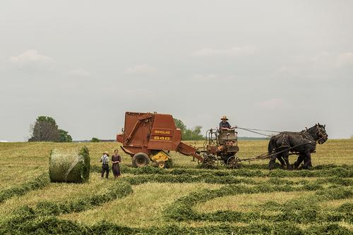 « Oui, les Amish sont des modèles… pour l'autonomie alimentaire » - Pierre1911