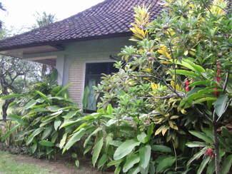 feuillages en Indonésie