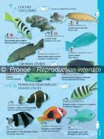 Aquaguide de Nouvelle Calédonie