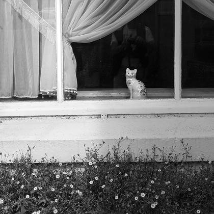 09 - Faux chats à la fenêtre