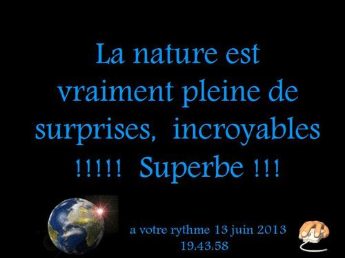 PPS MES CREATIONS La nature est vraiment pleine de surprises,