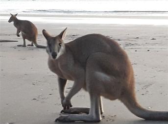 Australie  - 11
