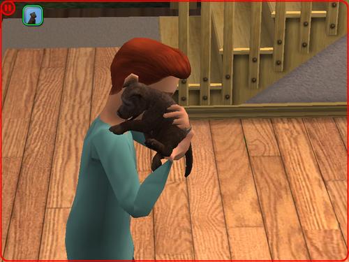 Sims 2 Family Dog Larans (Commencement de la F.10)