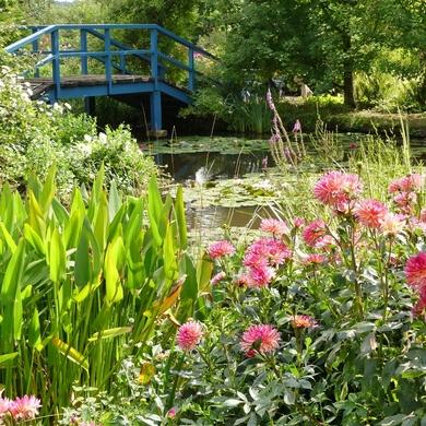 Dans le jardin d'André Van Beek...