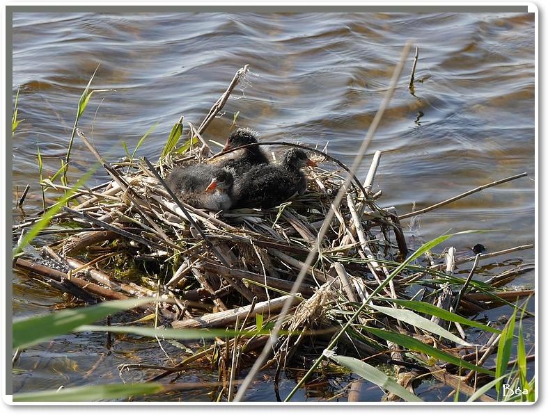 Concours de nids