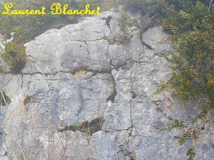 Laurent Blancher
