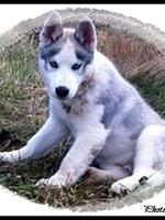 Jackson (4 mois)