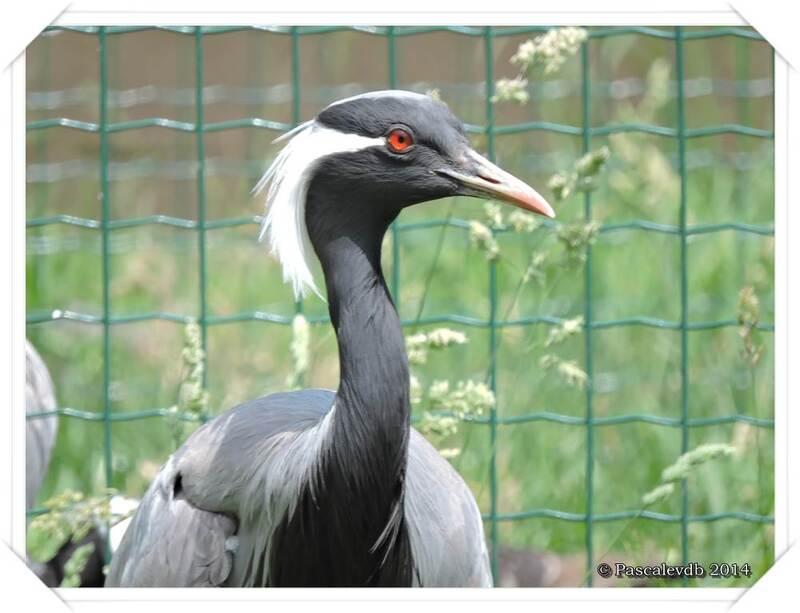 Zoo du Bassin d'Arcachon à La Teste de Buch - 15/20
