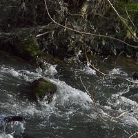 Rivière .