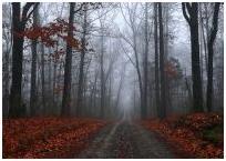 L'automne entonne (par Alexia4ever)