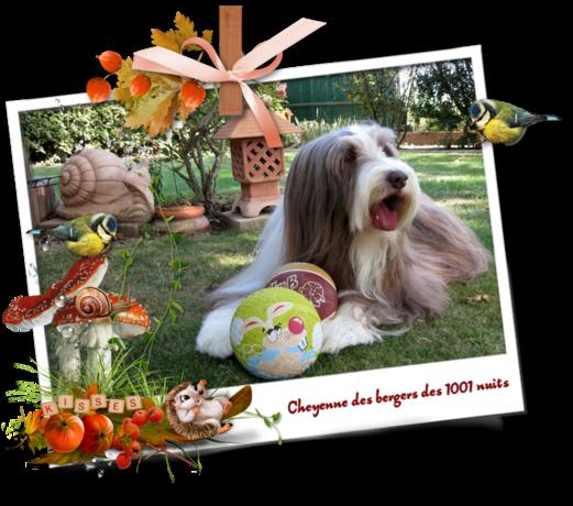 bonne journée de ♥ Cheyenne ♥ automne 2020 (page 2)