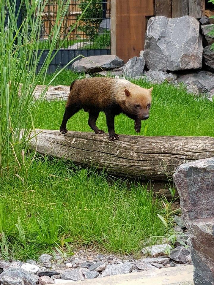 Petite balade au zoo de Landau