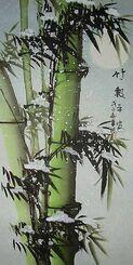 Pandas et pousses de bambou