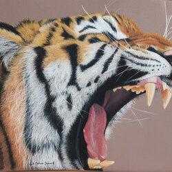 tigre 2 primé à la biennale du pastel des Monts du Lyonnais de St Laurent d'Agny
